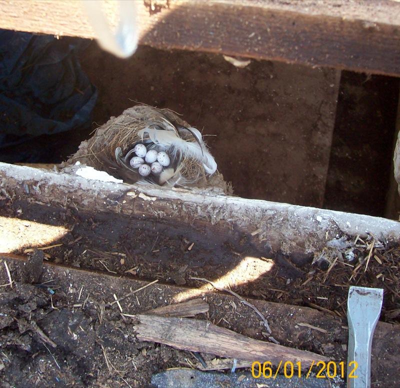 Treenut /Barn Deconstruction Phase 5: The Basement